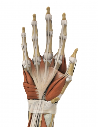 dupuytren's contracture pain physicians denver co