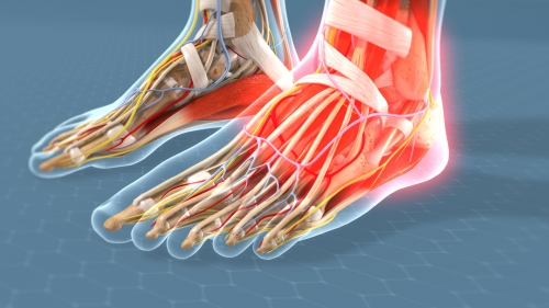 foot ankle pain doctors denver co